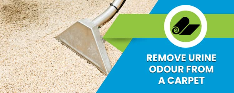 Remove Urine Odour From a Carpet